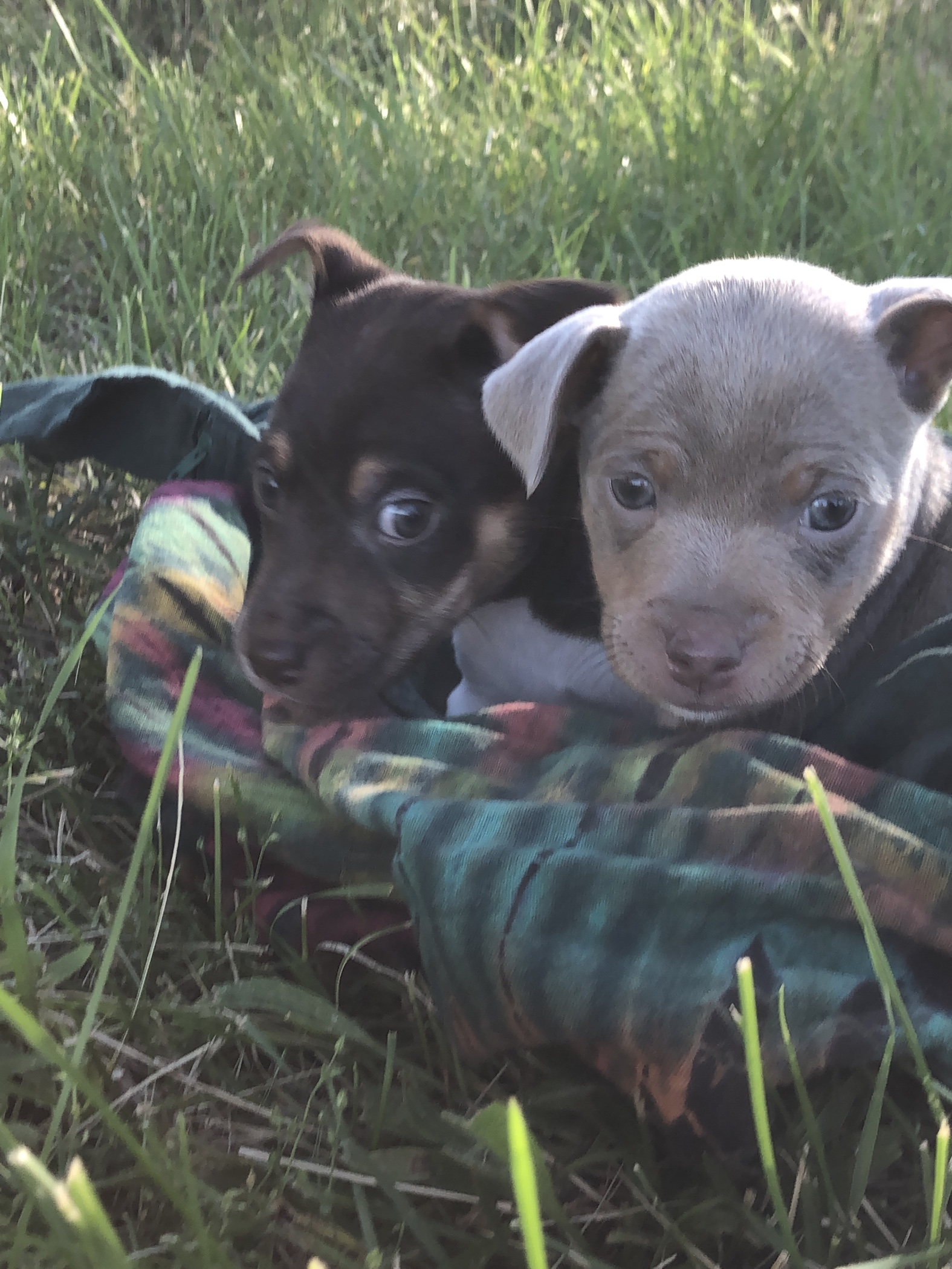 I have rat pups!